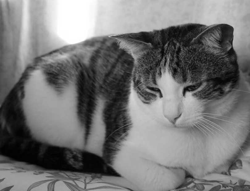 chat malheureux