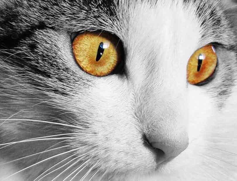 combien de temps vit un chat