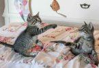 jouets pour chat d'appartement