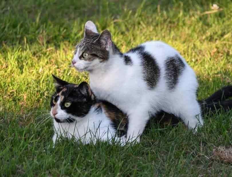 adopter un deuxième chat