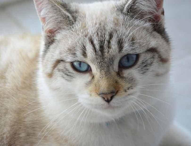 prenom pour chat male