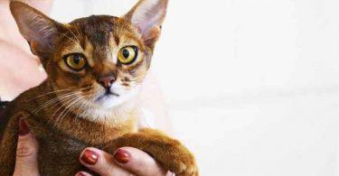souscrire une mutuelle pour animaux