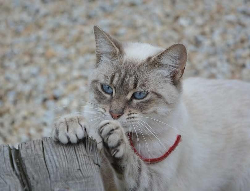 comment couper les griffes du chat