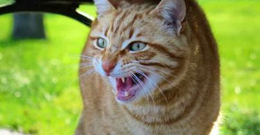 rassurer un chat nerveux