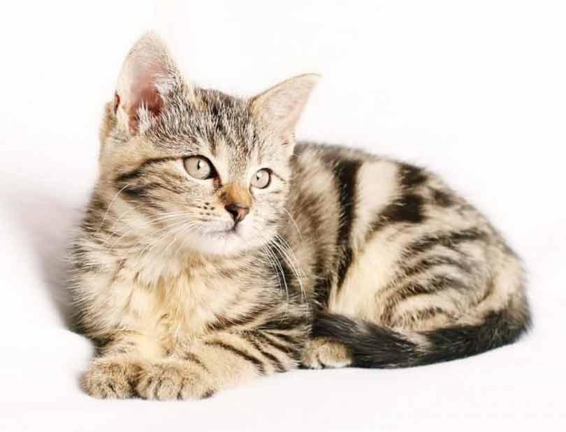 conseils pour les futurs propriétaires de chat