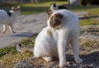 La pelade du chat