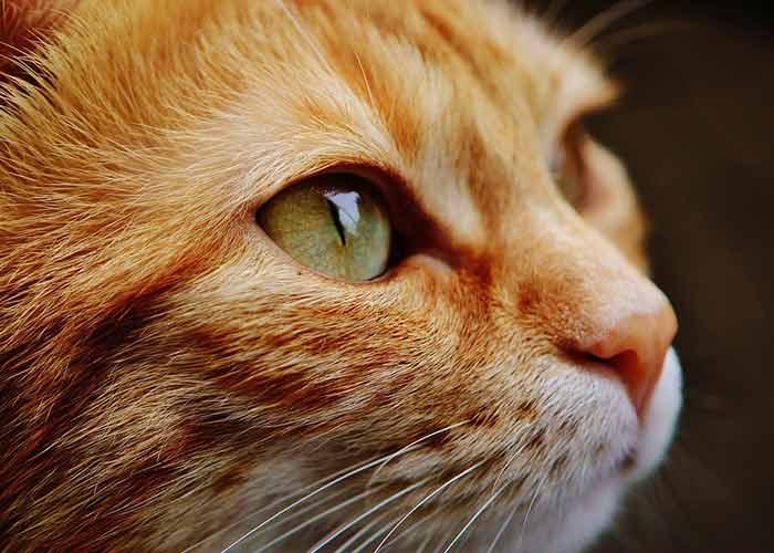 Assurance chat sans délai de carence ni franchise