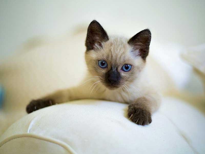 achat d'un chat
