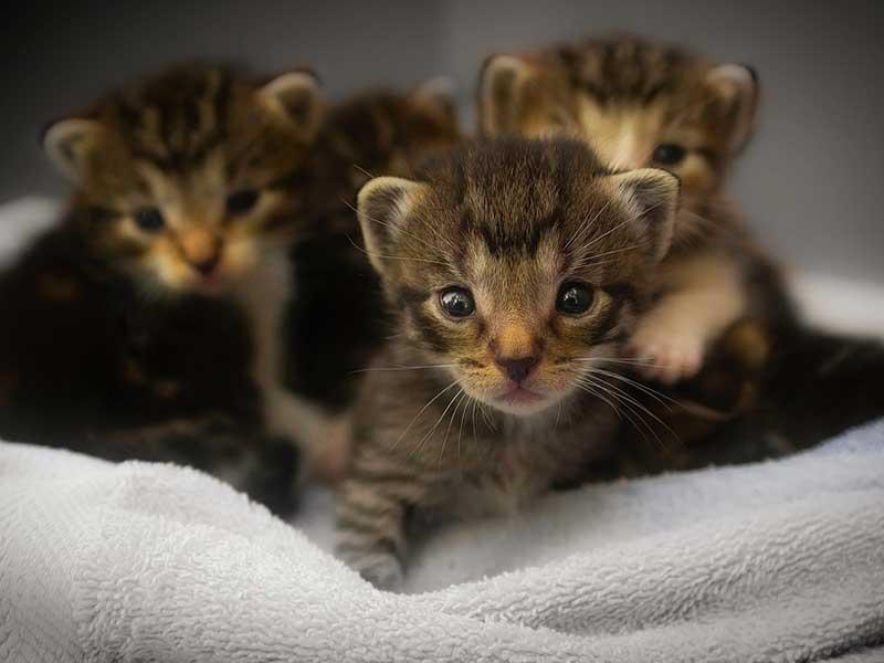 choisir un chat dans une portée