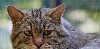 dépressiion du chat