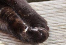 gruffiure de chat