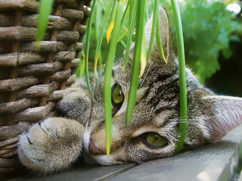 plantes toxiques chat