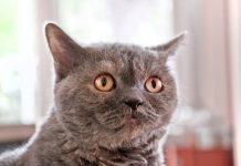 chat peur de sortir