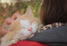 comment caresser son chat