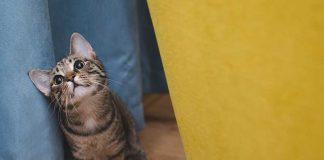 édiquer un chat