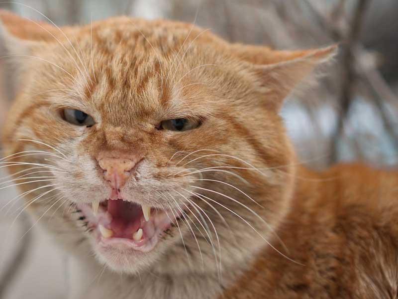 mon chat feule