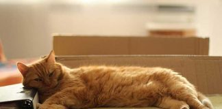 enlever odeur urine chat canapé