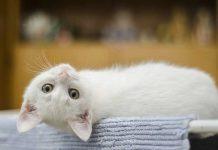s'occuper d'un chaton