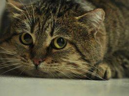 chat qui a peur de la litière