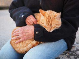 chat qui n'aime pas les caresses