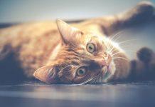 comment calmer un chat