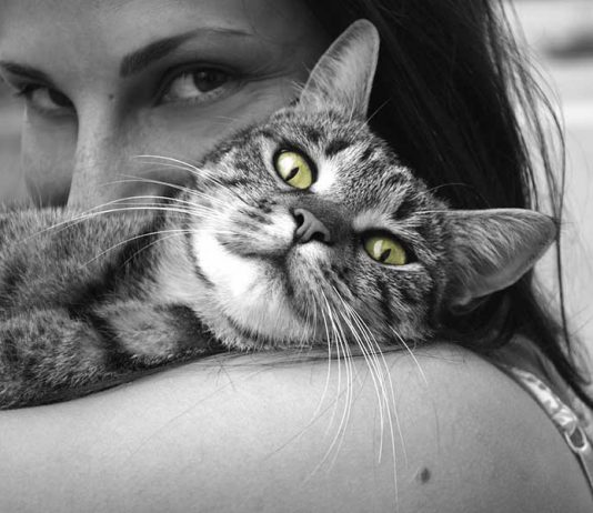 chat pot de colle
