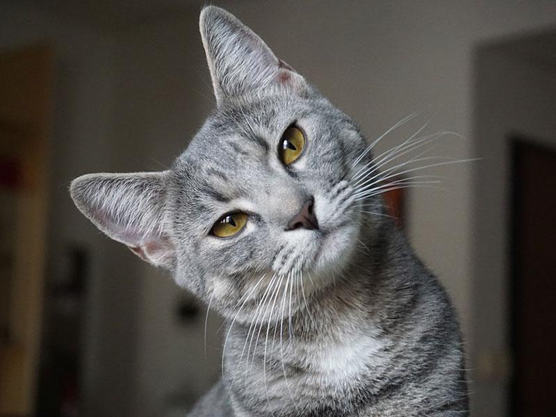 chat qui fait pipi partout