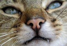 chat qui mordille