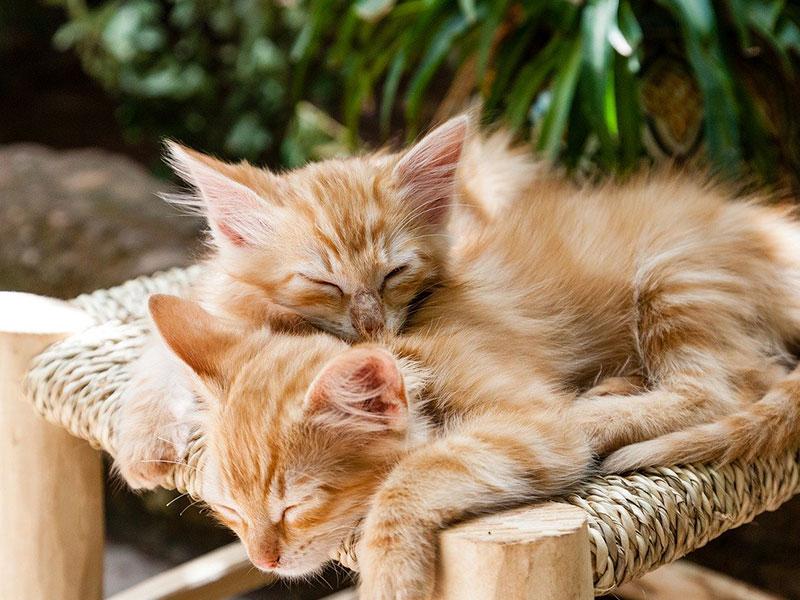 chat qui dort beaucoup
