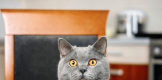 chat qui vole tout