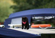 prendre le bateau avec son chat