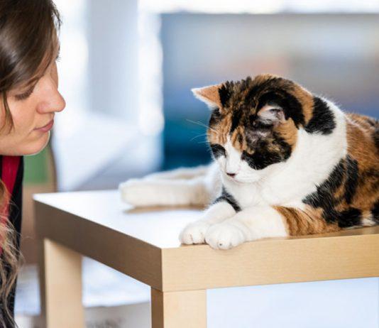 punir un chat