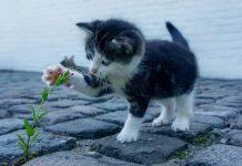 habituer un chat à aller dehors