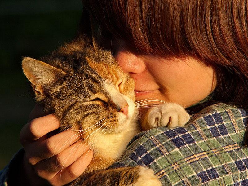 Pourquoi les chats préfèrent-ils certaines personnes ? - Ça m'intéresse