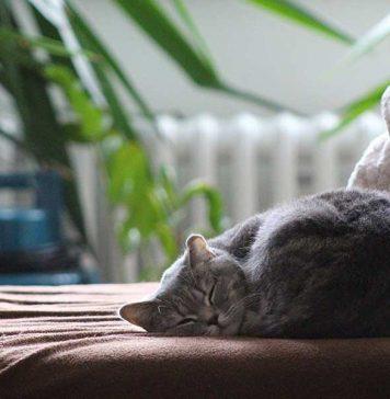 faire vivre un chat d'extérieur à l'intérieur