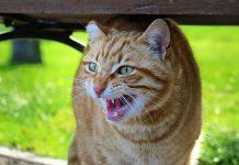 chat qui a peur des autres chats