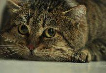 chat qui a peur des bruits
