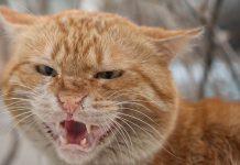 chat qui crache