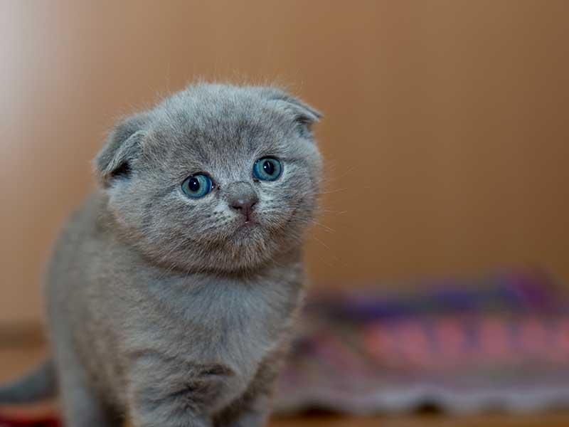 apprendre au chat à utiliser la litière