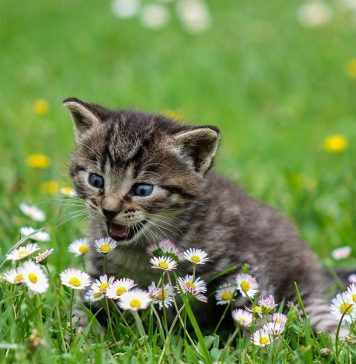 habituer son chaton à aller dehors