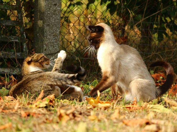 gérer un conflit entre chats