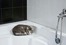 laver un chat qui a peur de l'eau