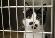 mettre un chat en cage