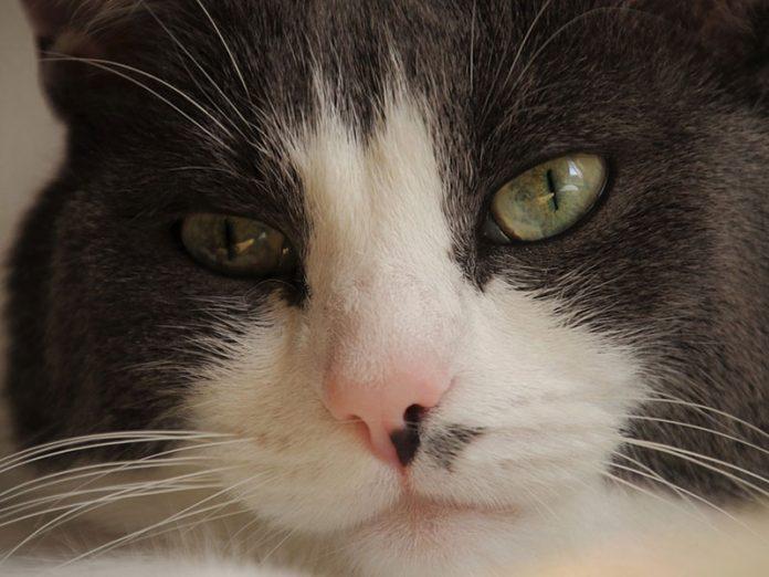 vices rédhibitoires du chat