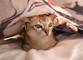 mon chat me réveille la nuit