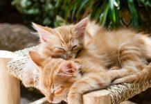 cohabitation entre plusieurs chats