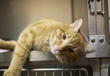 tarif veterinaire chat
